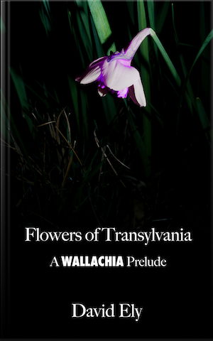 Flowers of Transylvania cover
